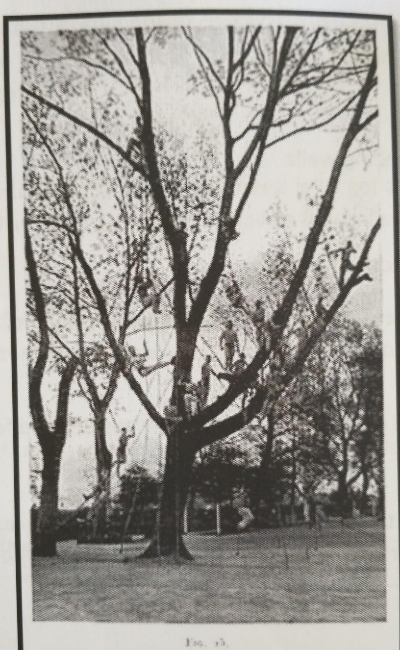 Usando un árbol como base para trepa y escalada